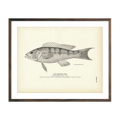 Vintage Squirrel-Fish 2 print