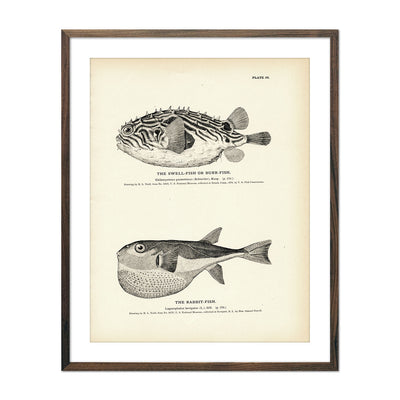 Vintage Swell-Fish and Rabbit-Fish print