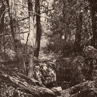 The Trail in the Woods, Gallatin Canyon, Yellowstone 1873