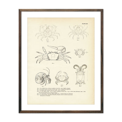 Vintage Various Crabs fish print