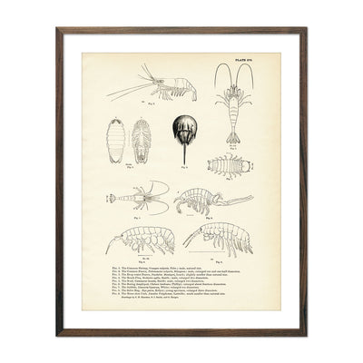 Vintage Various Sea Creatures - Set 1 fish print