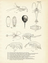 Various Sea Creatures - Set 1
