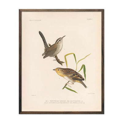 Wren and Sparrow