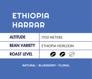 Ethiopia Harrar Natural Longberry