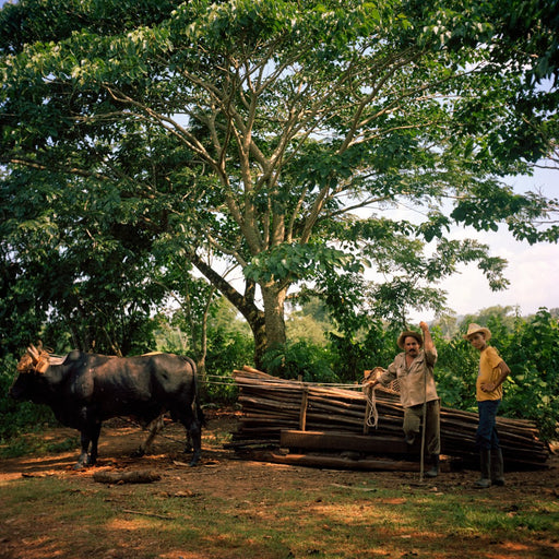 Cuban Farmers