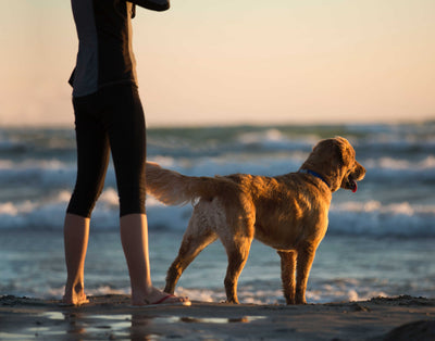Coronavirus Pet Guidelines