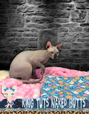 Sphynx Cat Kitten FeMale Black - Adelita - KingTutsNakedButts