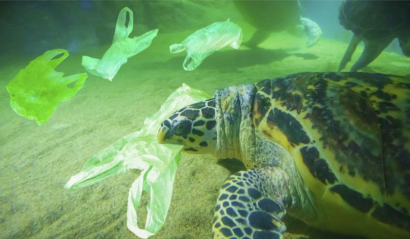 A Study on Plastic for Earth Month