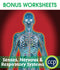 Senses, Nervous & Respiratory Systems - BONUS WORKSHEETS