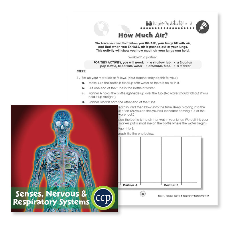 Senses, Nervous & Respiratory System: How Much Air Experiment - WORKSHEET