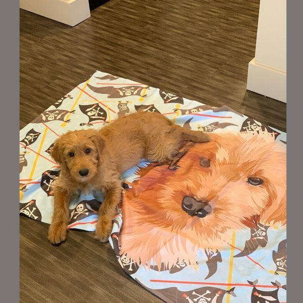 Custom Pet Beach Towel