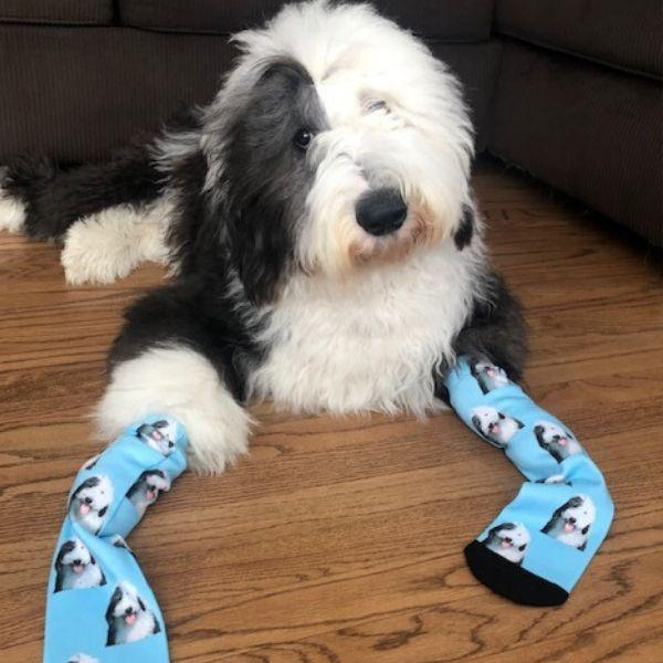 Custom Pet Printed Socks