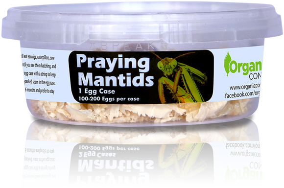 Organic Control Praying Mantids