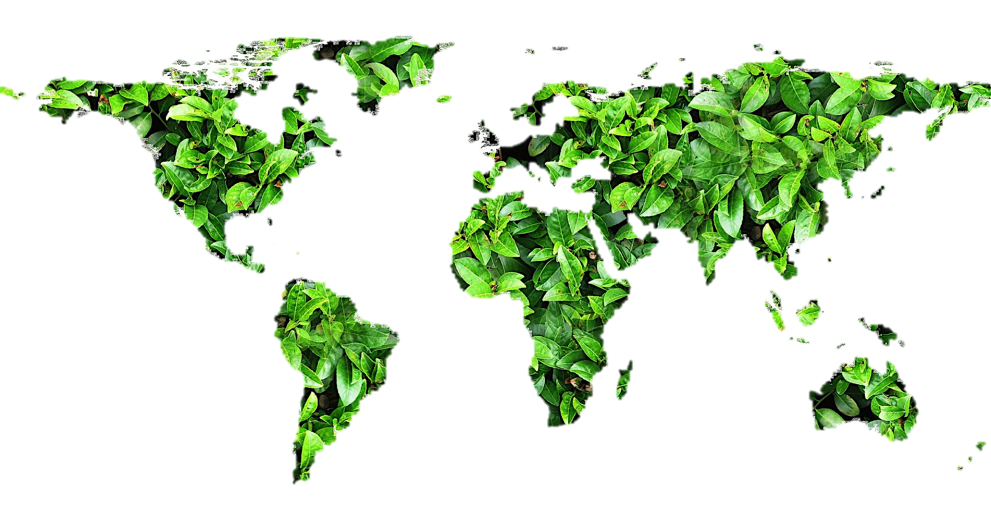 green leaves used to form world map image | One Wear Freedom Sustainability Pledge