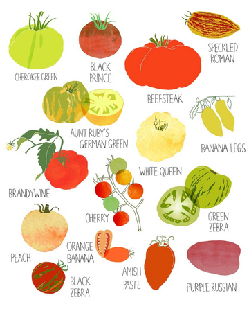 Vegetable illustration from Claudia Pearson