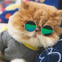 Load image into Gallery viewer, Cute Pet Glasses, Cat Sunglasses, Pet Accessories, Cat Glasses
