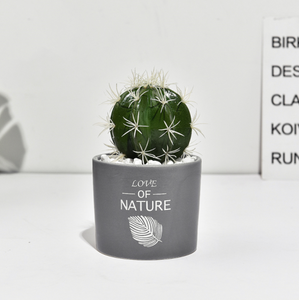 Succulent Simulation Green Plant Small Potted Cactus Ball