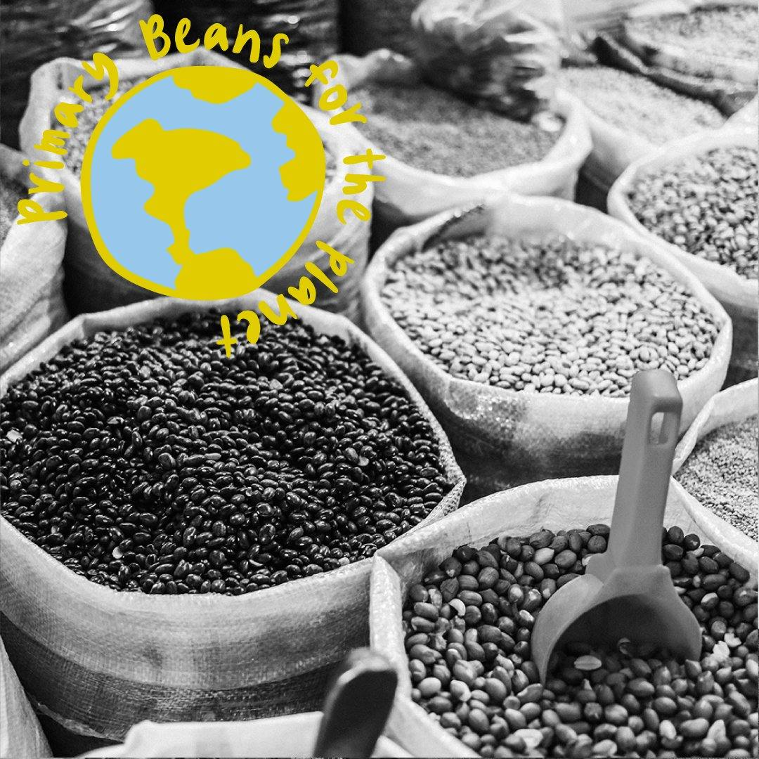 Small but mighty: Beans' treasured role in agriculture (Part 1) - Primary Beans