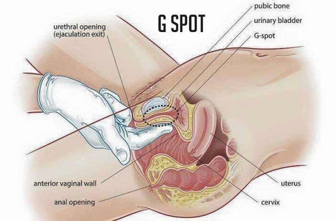 Where is the G-spot situated