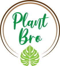 Plant Bro is a Canadian based plant business shipping Canada wide. We are a small family operation with deep roots and ethically sourced rare tropicals.