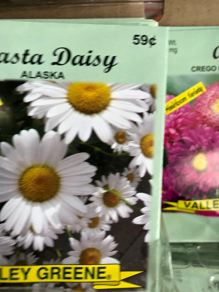 SHASTA DAISY FLOWER SEEDS - Unusual Finds Discount Store
