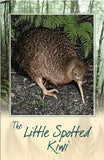 Little Spotted Kiwi Bird Sound Card