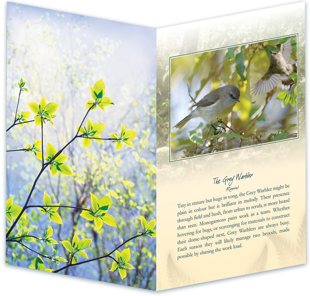 The Grey Warbler Bird Sound Card