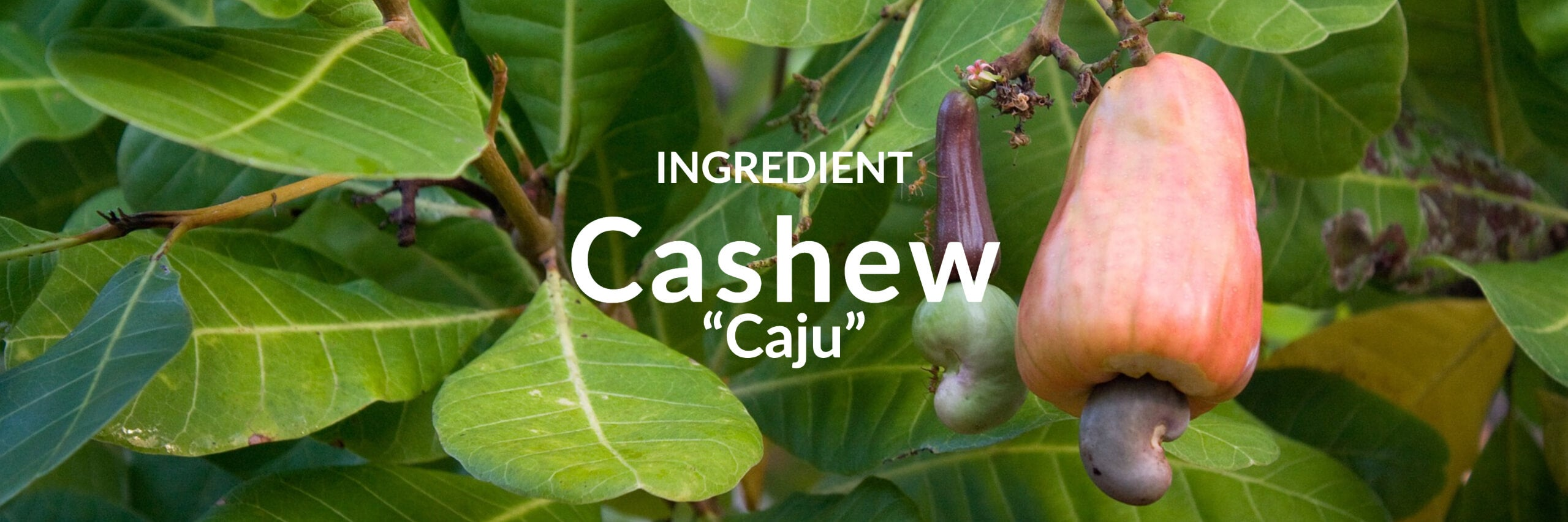 Cashew Collection