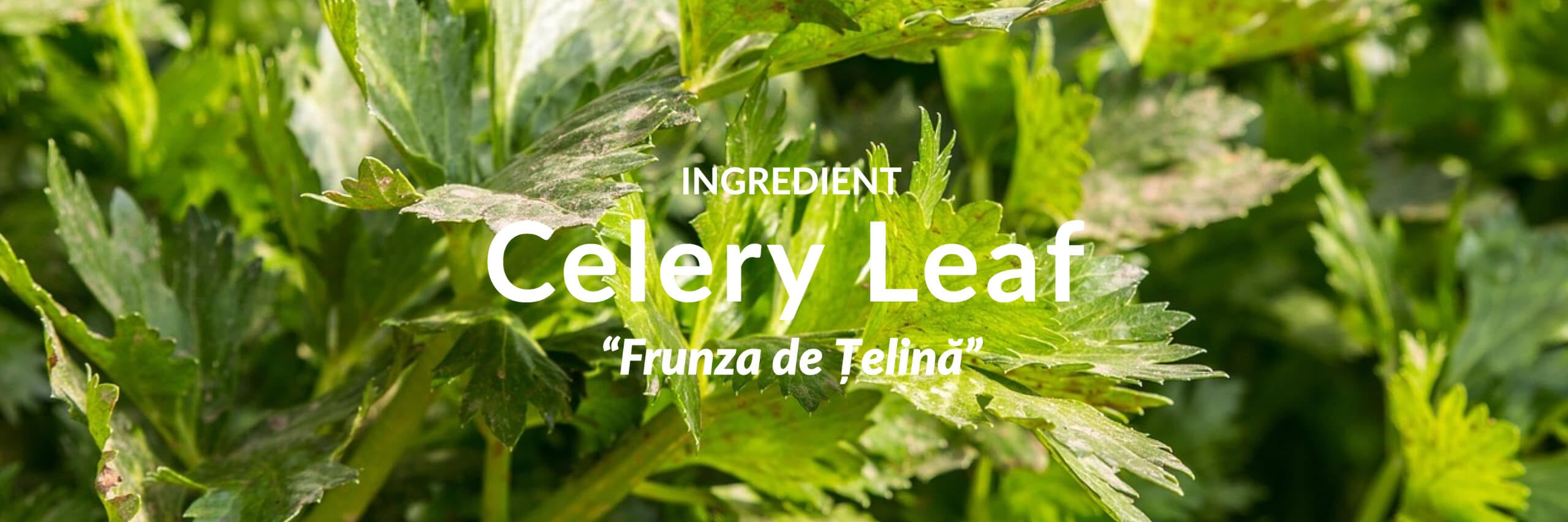 Celery Collection