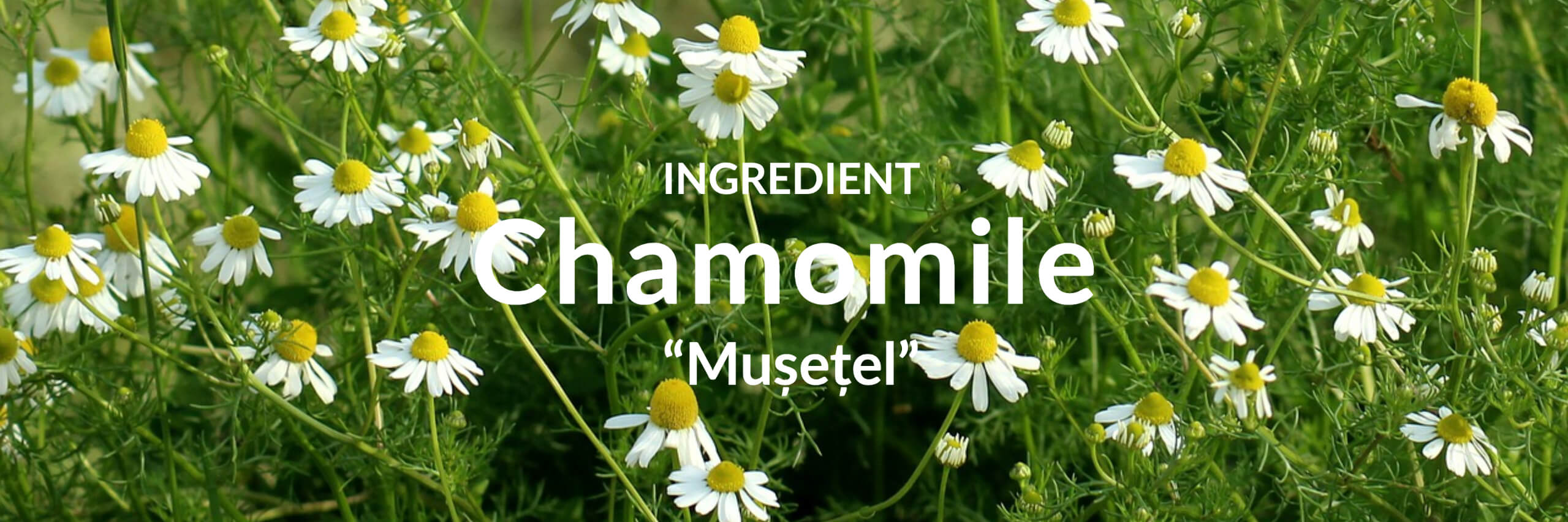 Chamomile Collection