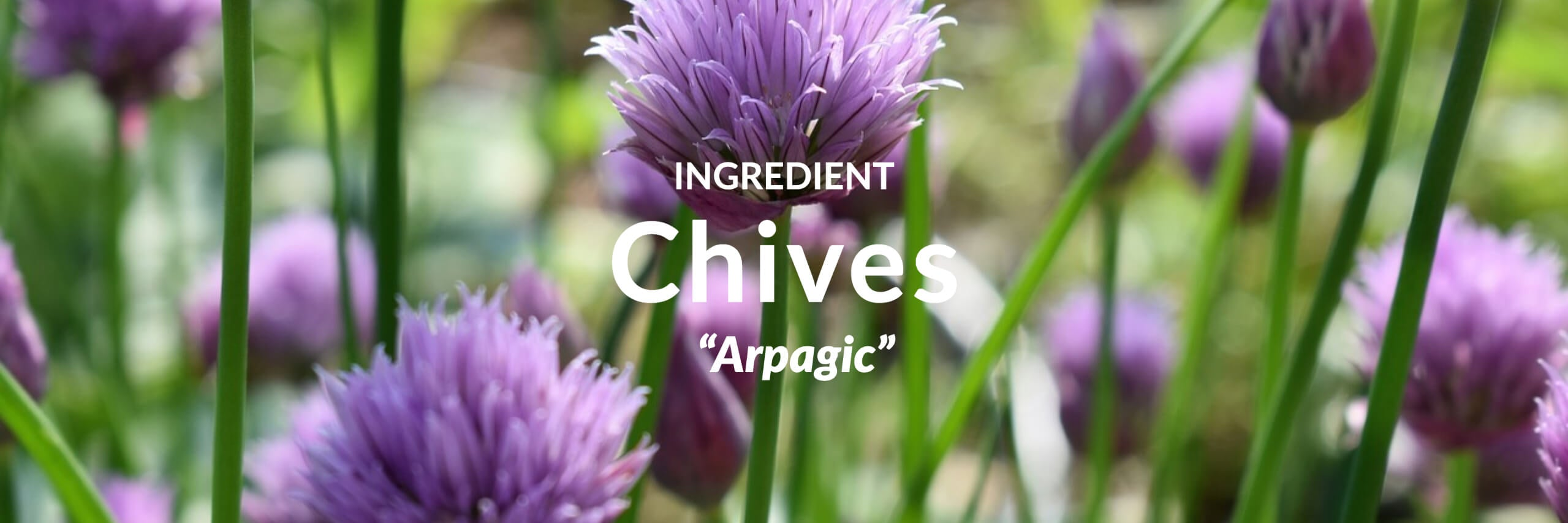 Chives Collection