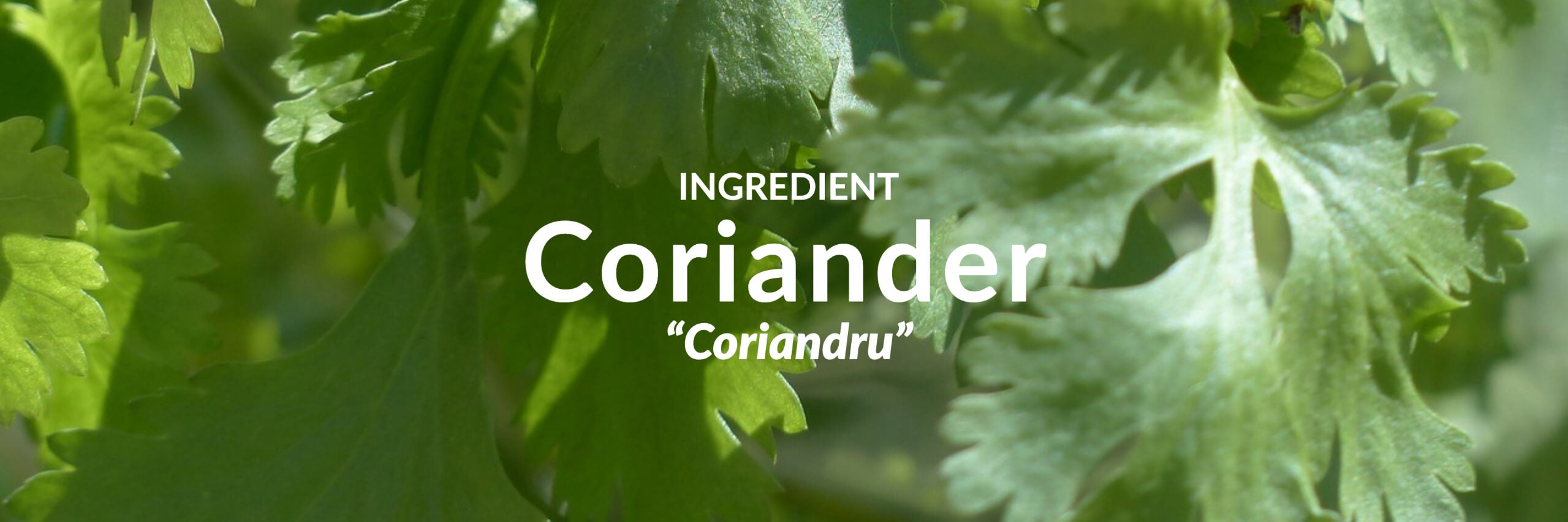 Coriander Collection