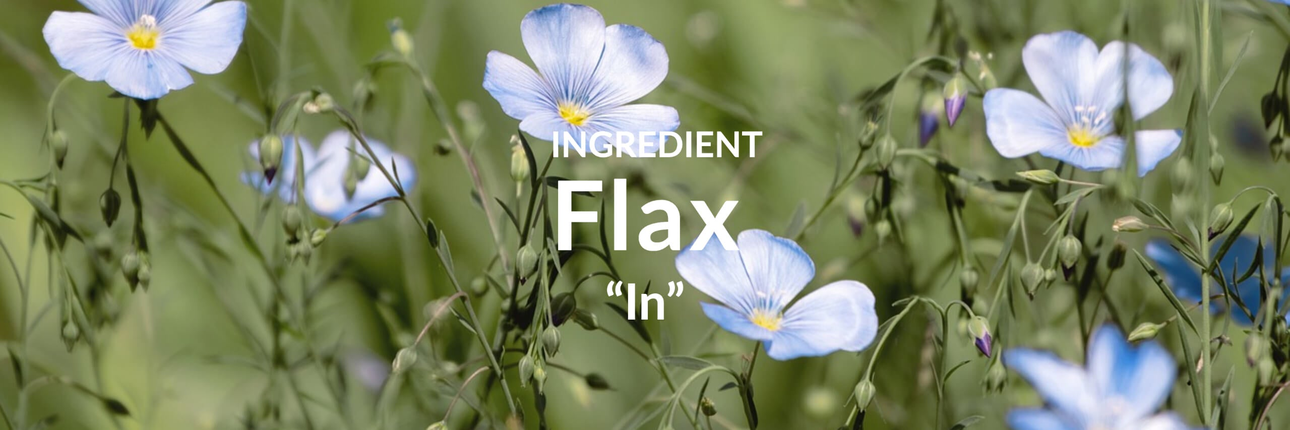 Flax Collection