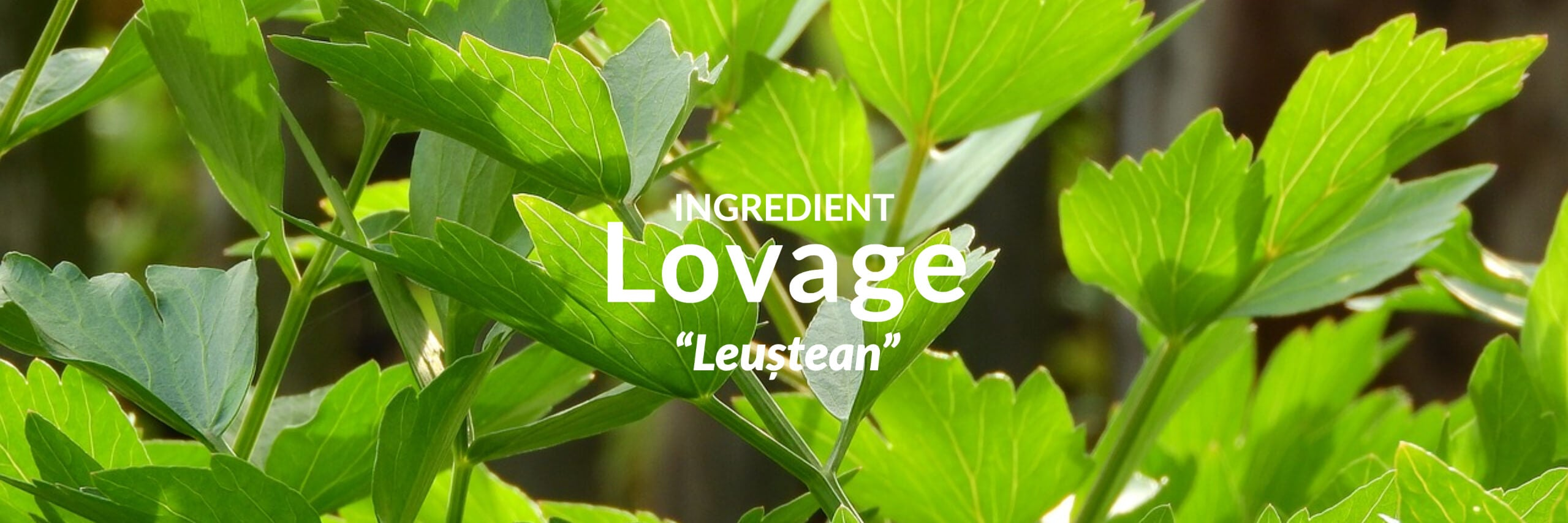 Lovage Collection