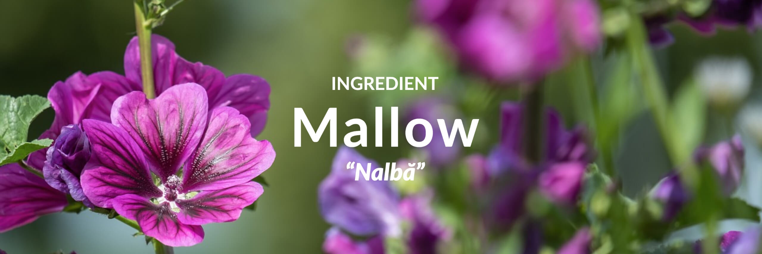 Mallow Collection