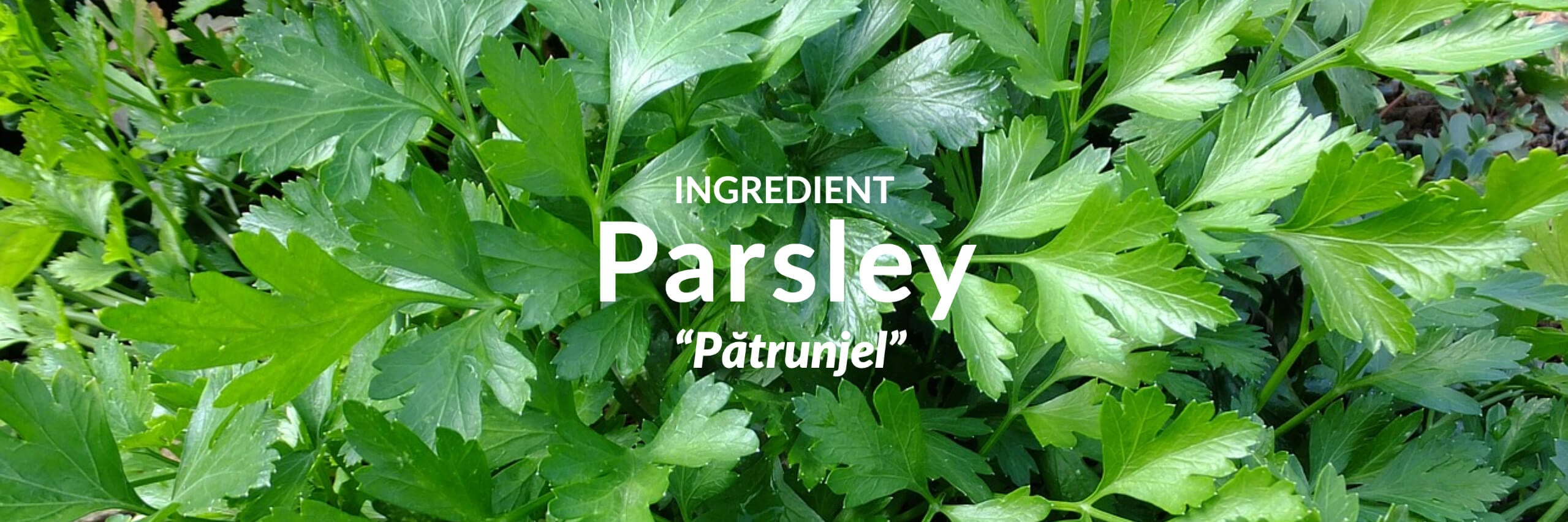 Parsley Collection