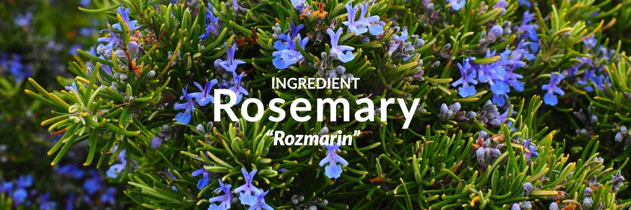 Rosemary Collection