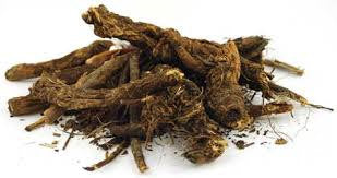 Osha Root Whole Wild Crafted 1 OZ USA