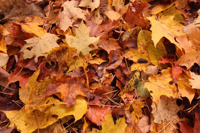 sustainable-fall-leaves