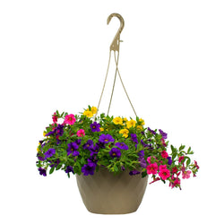 10 Inch Hanging Basket - Calibrachoa (Colors Vary)