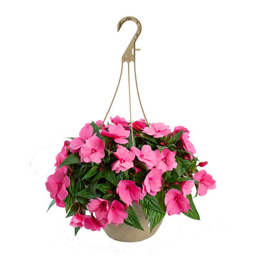 "10"" Hanging Basket - New Guinea Impatien (Colors Vary)"