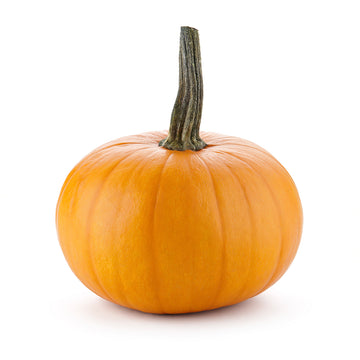 Pumpkin - Medium