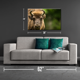 Bison Close Up Canvas Print - One Herd