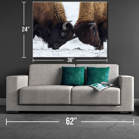 Bison Battle Canvas Print - One Herd