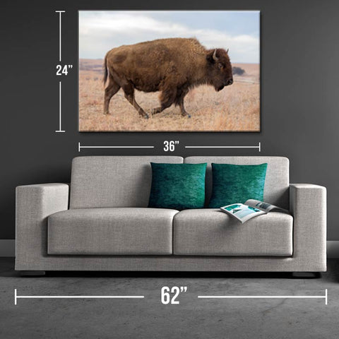 Lone Bison Canvas Print - One Herd