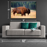 Lone Bison Roaming Canvas Print - One Herd
