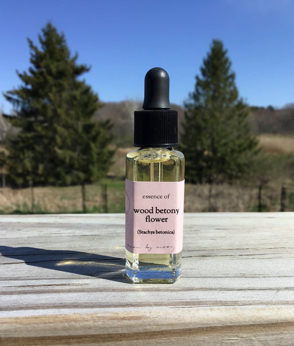 WOOD BETONY FLOWER ESSENCE by Moon by Moon Apothecary