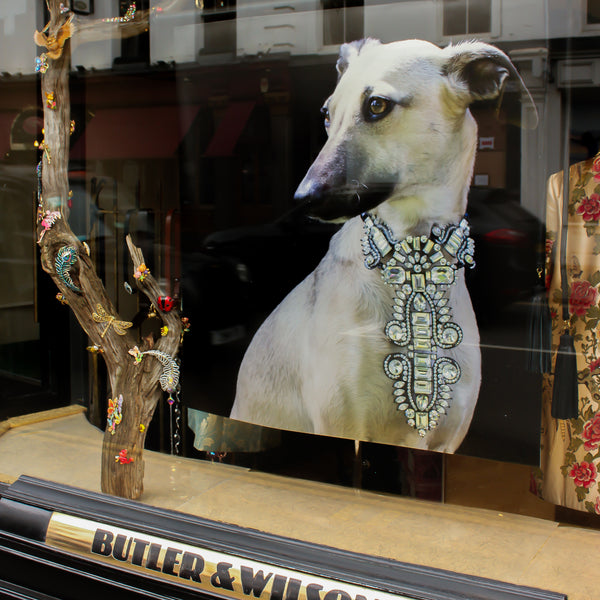Behind the 'Dogs' window display with Liddie Holt