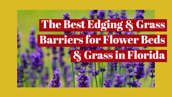 The Best Edging & Grass Barriers for Flower Beds  & Grass in Florida