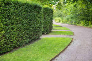 Types of Landscape Edging: Why Size & Depth ALWAYS Matter